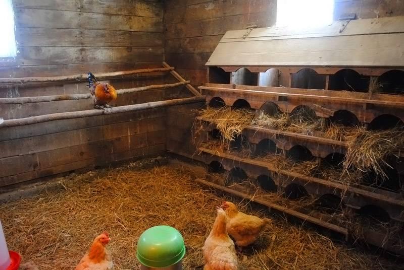 Насесты и гнезда для курятника