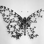 трафареты бабочек для декора своими руками: шаблоны