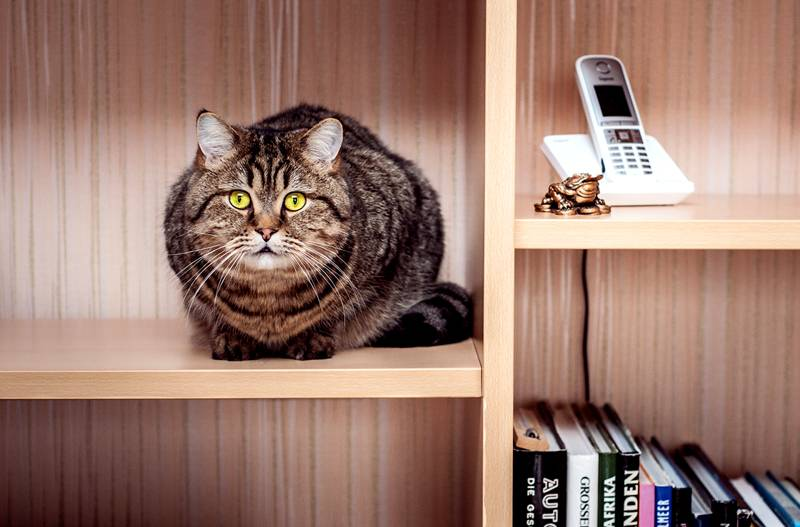 Наверно про них говорят, что, разбирая старые вещи в шкафу, можно найти много нового и пять раз – кота