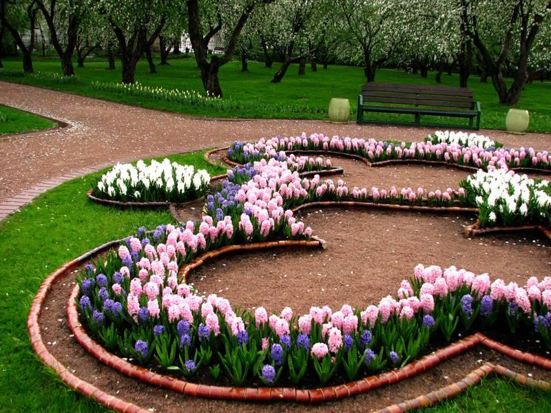Когда отцветут гиацинты, на их место посадят другие цветы
