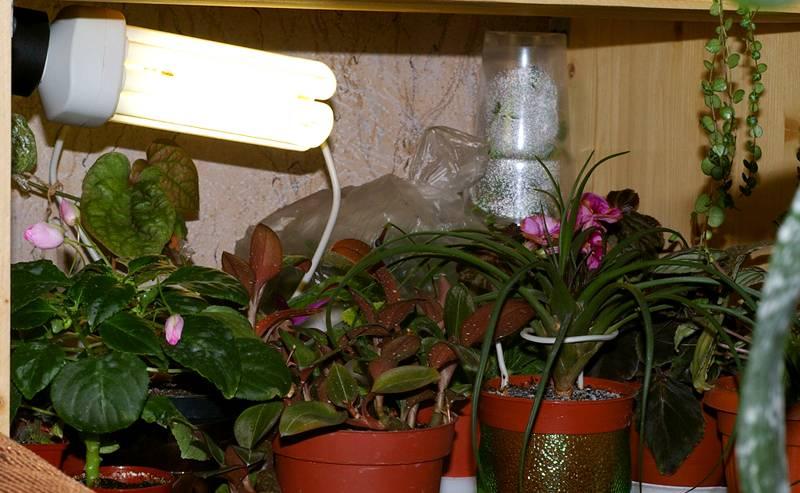 Применение энергосберегающих лампы для растений (подсветка)