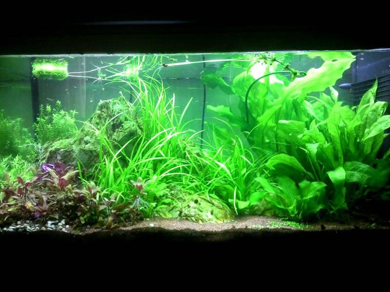 Диодная подсветка обеспечит аквариумным растениям все условия для роста и размножения