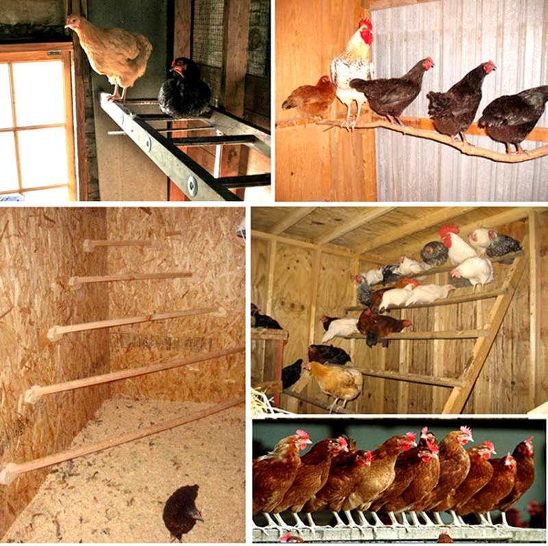 Такие специальные сооружения необходимы для отдыха и сна птицы