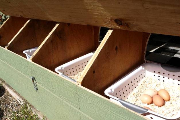 Пластиковые контейнеры с подсыпкой из опилок пригодятся для сбора яиц