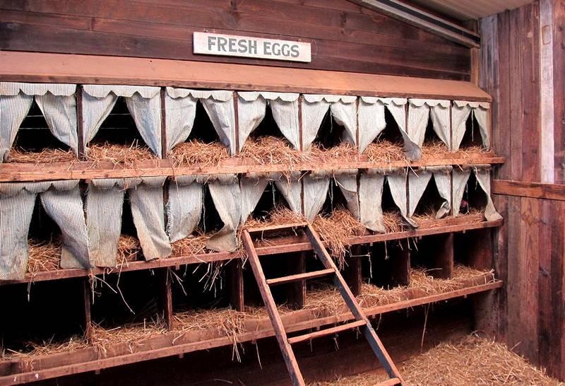 Исключить наличие вредных веществ из окружения кур можно с помощью экологически чистых материалов