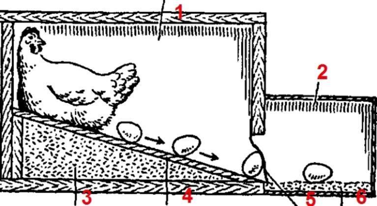 Гнездо для кур несушек с яйцесборником чертежи