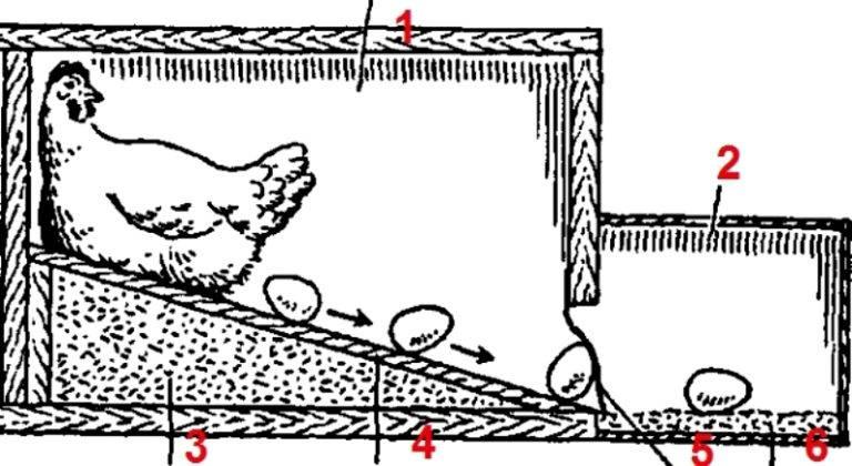 Гнезда для кур несушек чертежи
