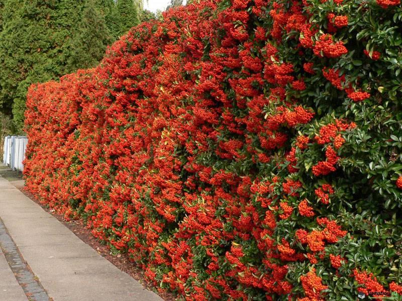 Яркая, цветущая стена