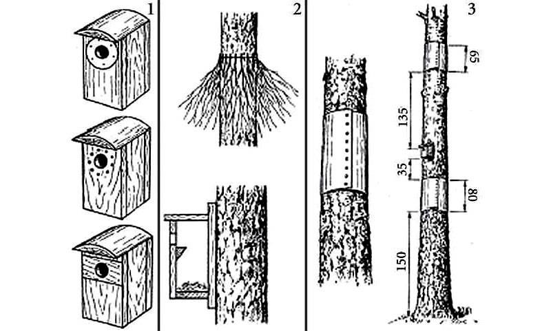 Методики защиты от дятлов (1) и котов (2, 3)