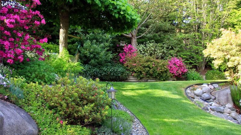 Сочетание падуба с другими растениями в ландшафтном дизайне