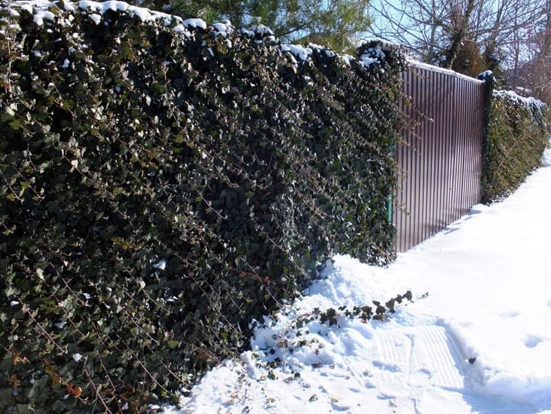 Вид заборчика зимой
