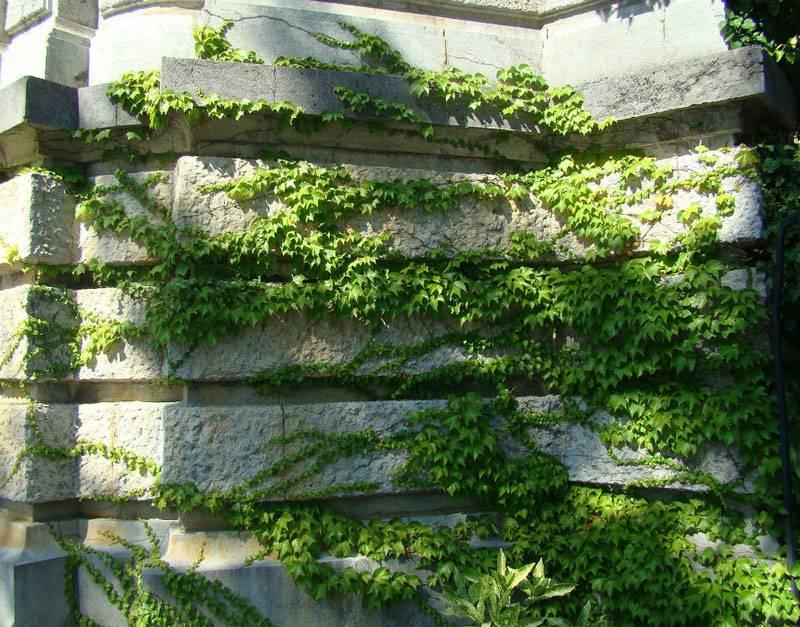 Естественное оплетение стен