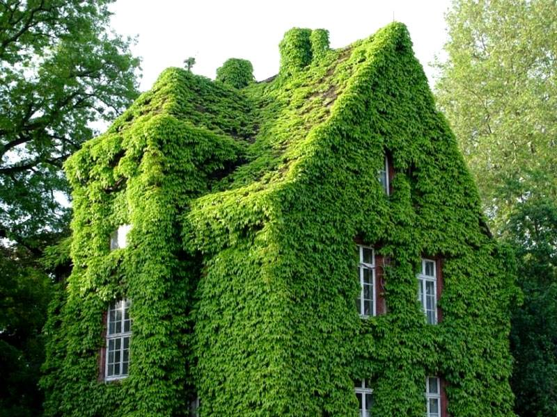 Полное озеленение дома