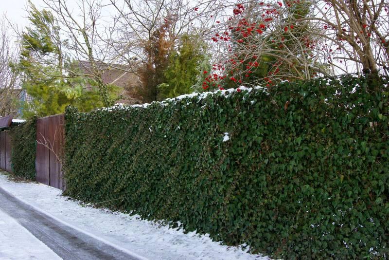 Даже зимой такой забор смотрится очень хорошо