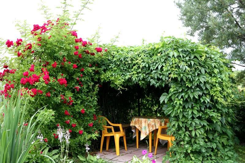 При помощи опоры можно создать зеленый шатер