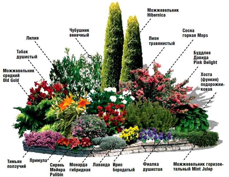 Схема цветника, созданная опытным специалистом