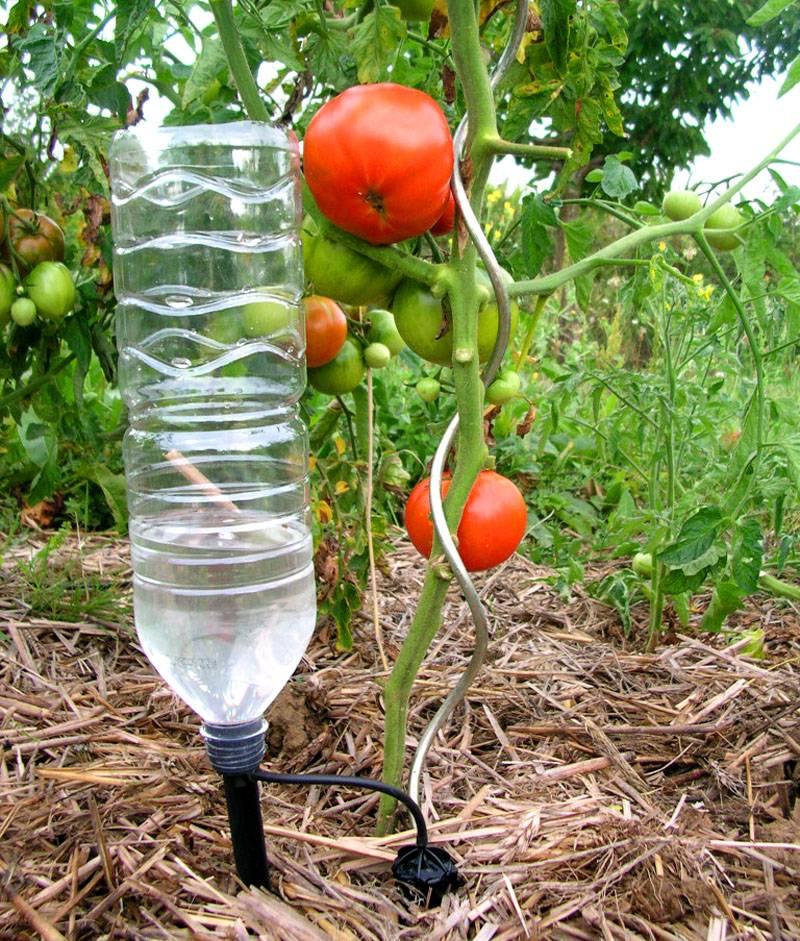 Автономное устройство из пластиковой бутылки для капельного орошения отдельного растения
