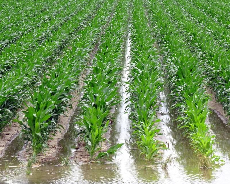 Бороздовой способ применяют для орошения полей