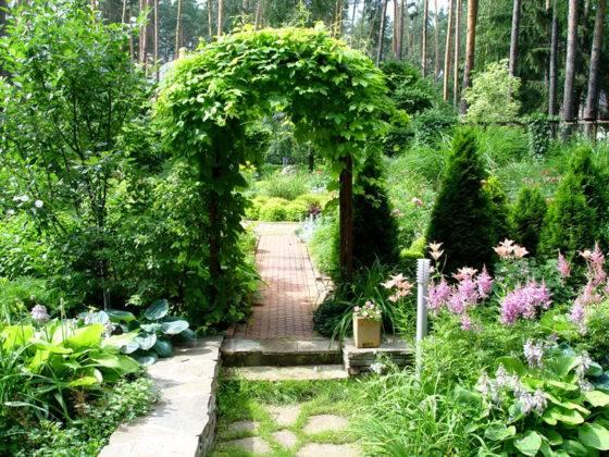 Фото сада на частном участке демонстрирует зонирование с применением зеленых насаждений. Проход украшает арка. Эту конструкцию не сложно сделать из металлических или деревянных деталей