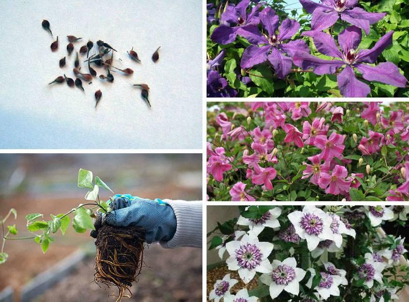Семена и корневая система