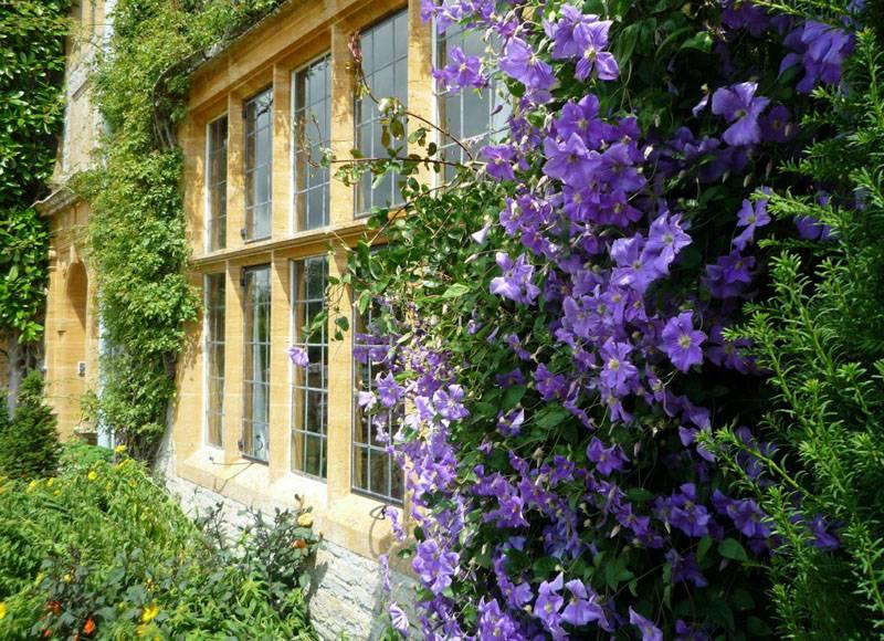 На стенах домов прекрасно выглядят эти нежные цветы