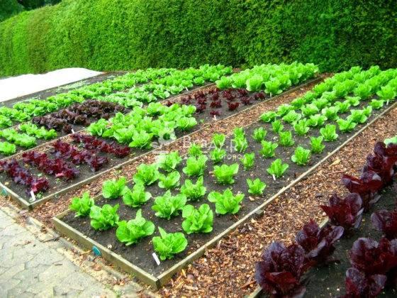 Благоустройство сада и огорода упрощает процесс выращивания, повышает шансы на хороший урожай