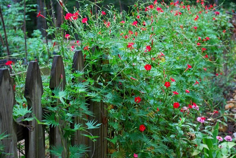 Даже простой деревянный забор преобразиться красками жизни