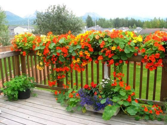 Терраска с такими цветами очень красиво смотрится летом