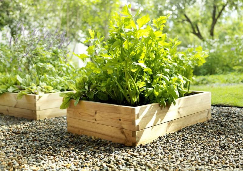 Маленькие клумбочки для отдельных растений