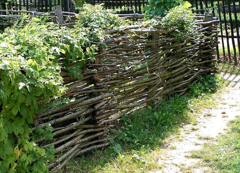 Ограда из ветвей деревьев