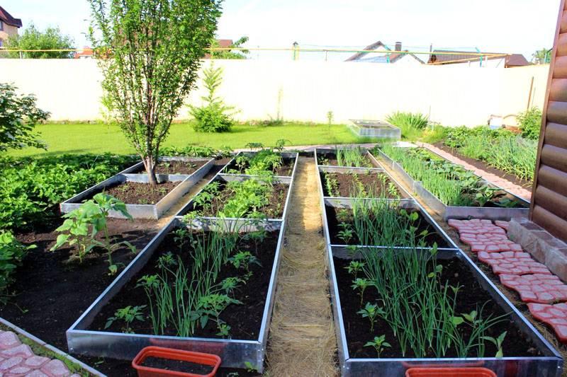 Хорошее расположение растений на небольшой площади
