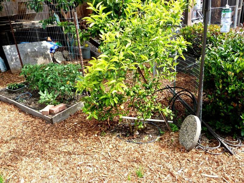 Небольшие высадки отдельных растений и кустов