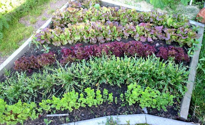 «Радуга» из съедобных растений