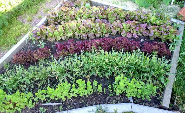 Какие растения сажать на даче в августе 77
