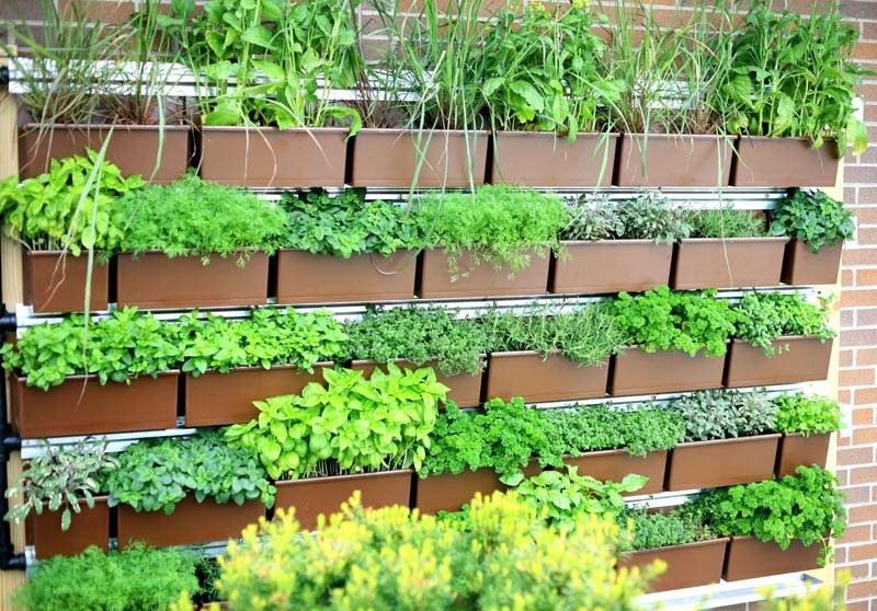 Выращивание зелени в коробах 93