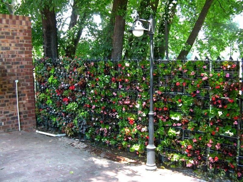 Цветы во весь забор