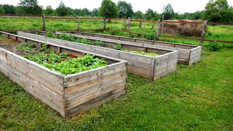 Высокие деревянные конструкции для хорошего урожая