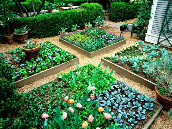 Сочетание растений на одной квадратной грядке