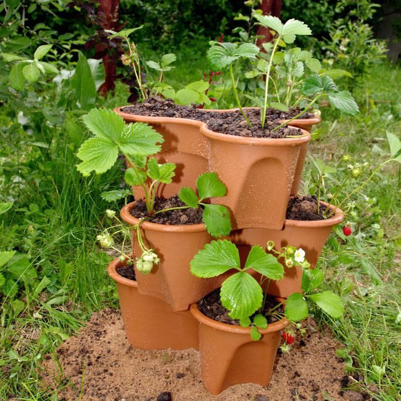 Покупные специальные горшки для высадки растений