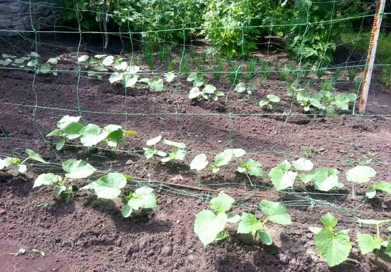 Сетка для активного роста овощей