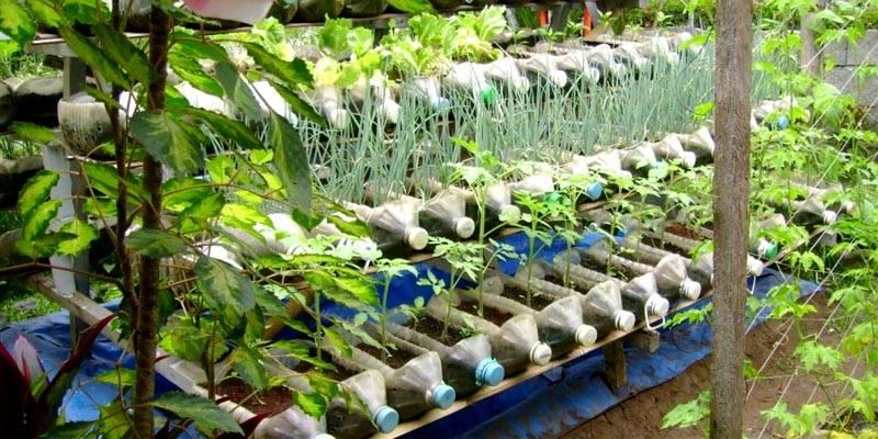 Применение пластиковых бутылок на огороде