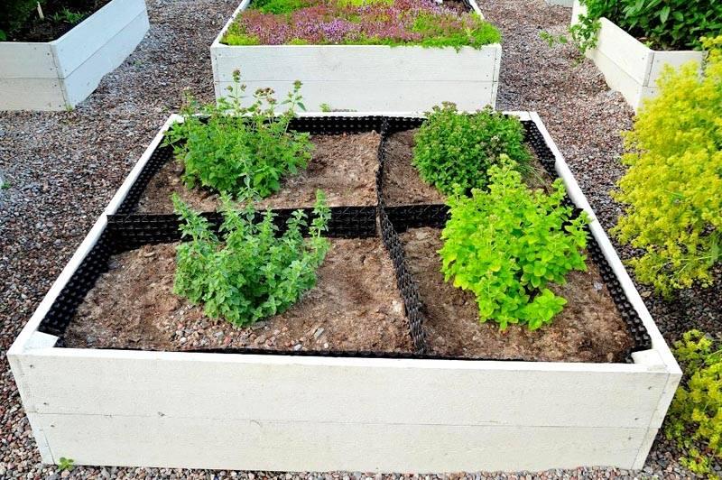 Вариант выращивания зелени