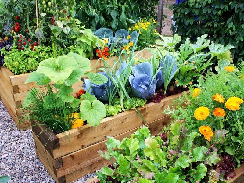 Сад и огород своими руками не как у всех! Интересные идеи