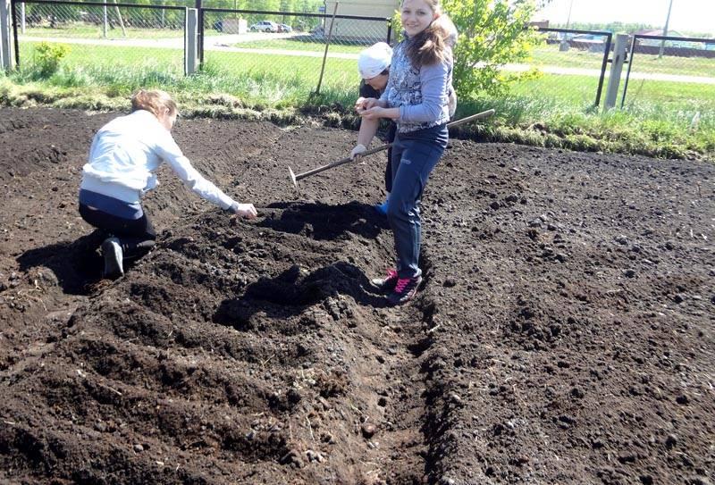 Подготовка посадочных мест и посев