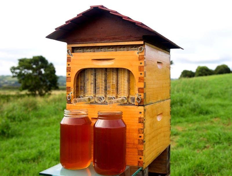 Интересное устройство – оно качает мед непосредственно из улья
