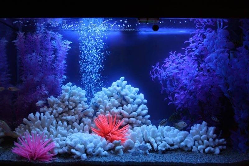 Фон аквариума – не последнее дело