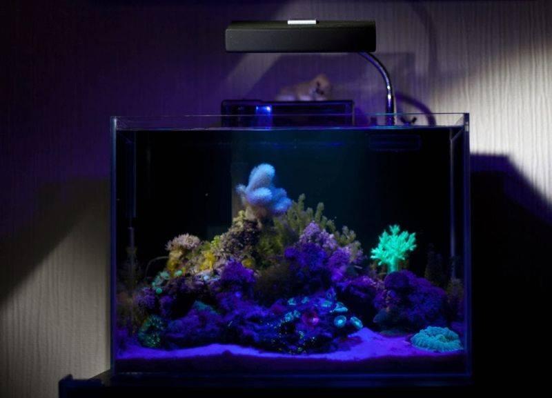 Бактерии и в воде боятся ультрафиолетовые лучи