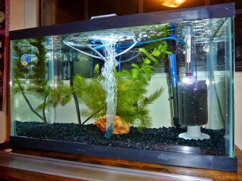 Без качественного фильтра о здоровых рыбках и растениях можно забыть