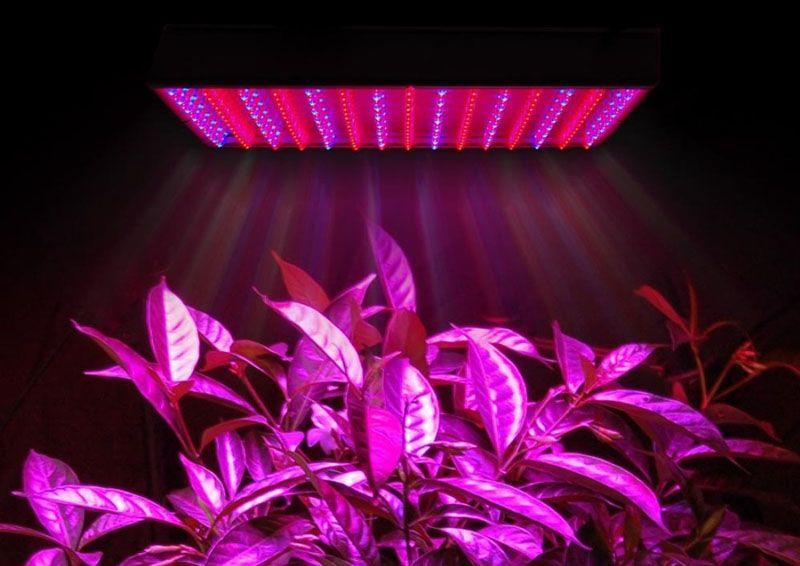 Светодиодная ультрафиолетовая лампа поддерживает внутренние процессы роста и развития растений зимой