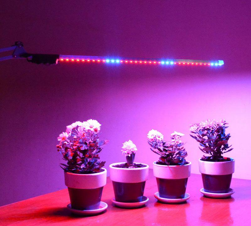 Свет для растений очень важен